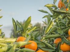 Machina ze słabością do pomarańczy (czyli RPi z Tensorflow)